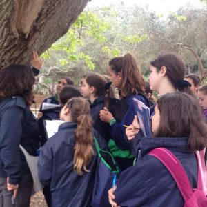 Science Fieldwork at Buskett Gardens